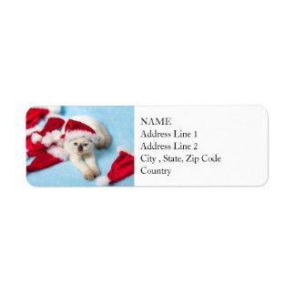 Étiquette Chaton siamois : Casquettes de Père Noël