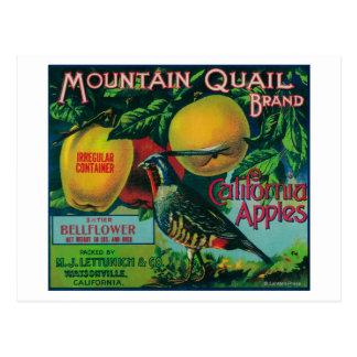 Étiquette de caisse d'Apple de cailles de montagne Carte Postale