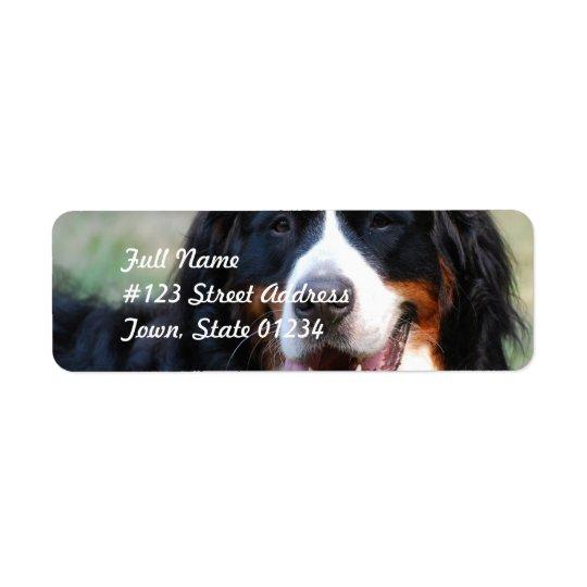 Étiquette de chien de montagne de Bernese