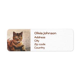 Étiquette Jeune animal familier mignon de Kitty de chaton de