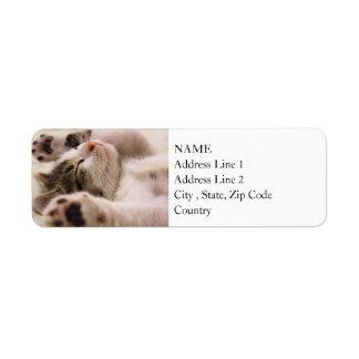 Étiquette Pattes somnolentes du chaton   étirées