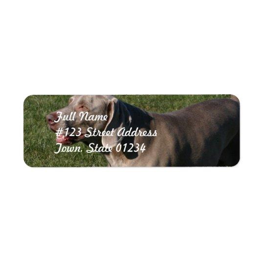 Étiquette postale espiègle de chien de Weimaraner