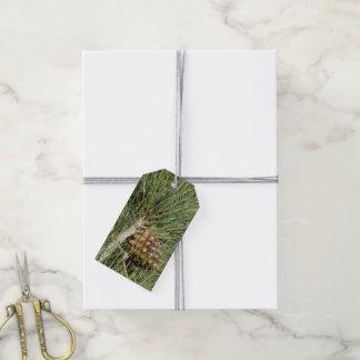 Étiquettes-cadeau Arbre de la Californie de plan rapproché de pin de