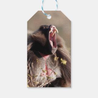 Étiquettes-cadeau Babouin masculin de gelada (gelada de