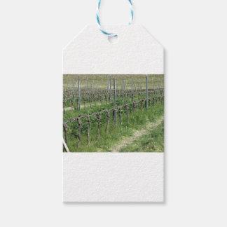 Étiquettes-cadeau Champ nu de vignoble en hiver. La Toscane, Italie