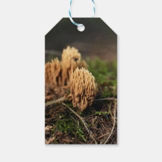 Étiquettes-cadeau Champignons de corail de souillure verts (abietina