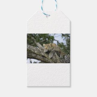 Étiquettes-cadeau Chat sauvage animal de safari de l'Afrique d'arbre