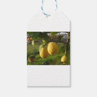 Étiquettes-cadeau Citrons jaunes s'élevant sur l'arbre au coucher du