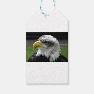 Étiquettes-cadeau Eagle chauve