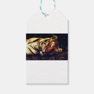 Étiquettes-cadeau Faune animale de tigre reposant le macro plan