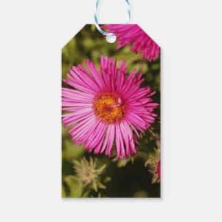 Étiquettes-cadeau Fleur d'un aster de Nouvelle Angleterre