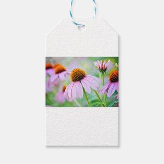 Étiquettes-cadeau Fleur sauvage coloré d'echinacée