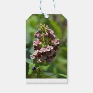 Étiquettes-cadeau Fleur sauvage indien de pomme de terre
