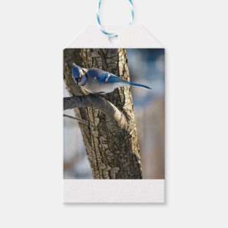 Étiquettes-cadeau Geai bleu