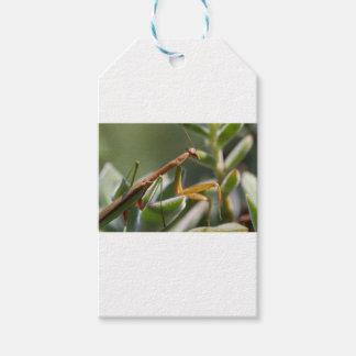 Étiquettes-cadeau Insecte de mante de prière