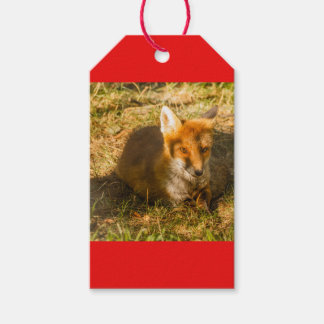 Étiquettes-cadeau le plan rapproché d'un renard se reposant en parc