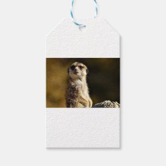 Étiquettes-cadeau Meerkat