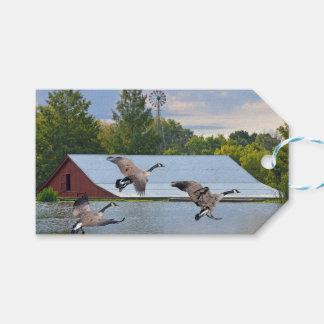 Étiquettes-cadeau Oies du Canada débarquant sur l'étang