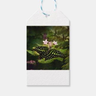Étiquettes-cadeau Papillon vert de malachite