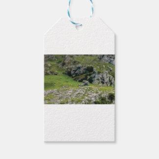 Étiquettes-cadeau pierre verte de merveille