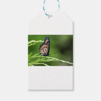Étiquettes-cadeau Plexippus de Danaus de papillon de monarque
