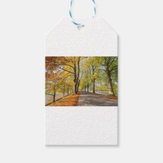 Étiquettes-cadeau Route néerlandaise avec des arbres de hêtre dans