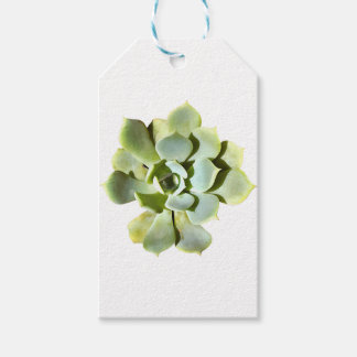 Étiquettes-cadeau Succulent