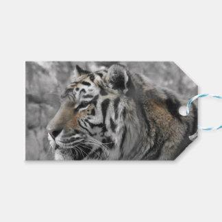 Étiquettes-cadeau Tigre blanc nature animal sauvage