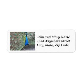 Étiquettes de adresse de retour de photo de rose