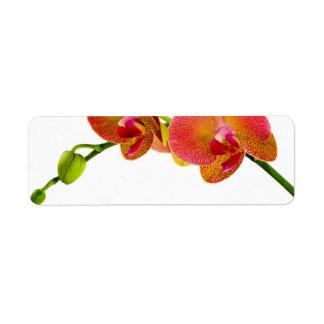 Étiquettes vides faits sur commande d'orchidées
