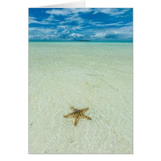 Étoile de mer en eau peu profonde, Palaos Carte De Vœux