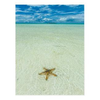 Étoile de mer en eau peu profonde, Palaos Carte Postale