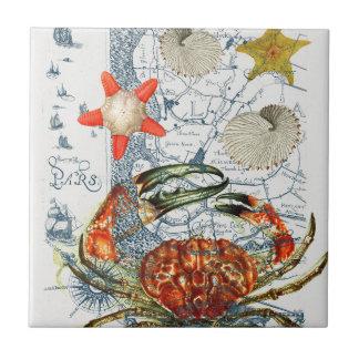 étoiles de mer désagréables de carte petit carreau carré
