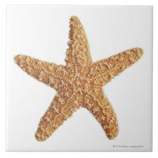 Étoiles de mer d'isolement sur le blanc grand carreau carré