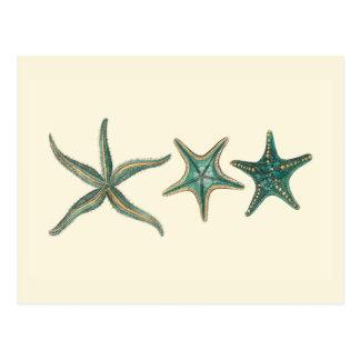 Étoiles de mer triples bleu vert cartes postales
