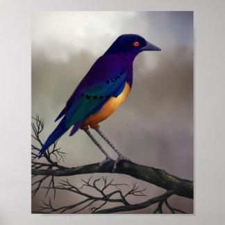 Étourneau - affiche 8x10 d'art de faune posters