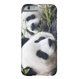 Étreintes d'ours panda coque iPhone 6 barely there
