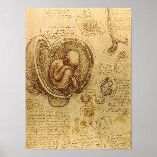 Étude de foetus de bébé par Leonardo da Vinci Posters