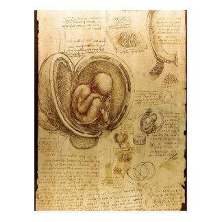 Études de description des embryons Leonardo da Vin Cartes Postales