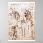 Études squelettiques, Leonardo da Vinci, 1510 Affiche