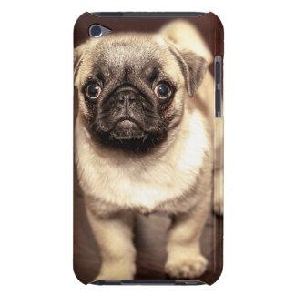 Étui Barely There iPod Beau carlin de chiot, chien, animal familier,