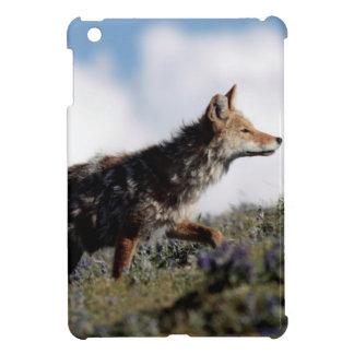 Étui iPad Mini Un coyote marche en parc national de Yellowstone,