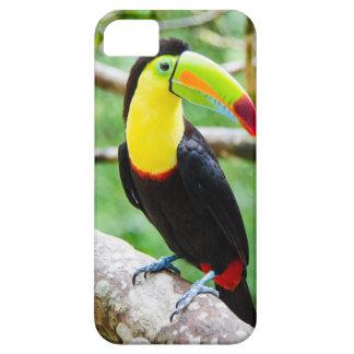 Étui iPhone 5 Beau toucan