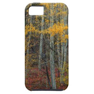 Étui iPhone 5 Plancher rouge de forêt