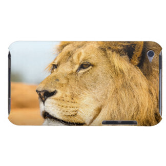 Étui iPod Touch Grand lion regardant loin
