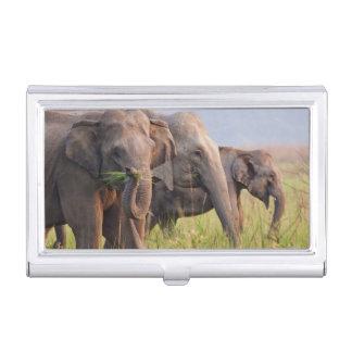 Étui Pour Cartes De Visite Éléphants asiatiques indiens montrant l'herbe