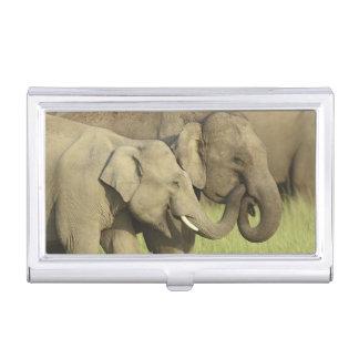 Étui Pour Cartes De Visite Éléphants indiens/asiatiques partageant a