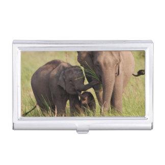 Étui Pour Cartes De Visite Famille indienne d'éléphant asiatique dans la