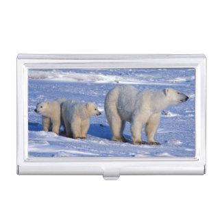 Étui Pour Cartes De Visite Le Canada, Manitoba, Churchill. Mère d'ours blanc