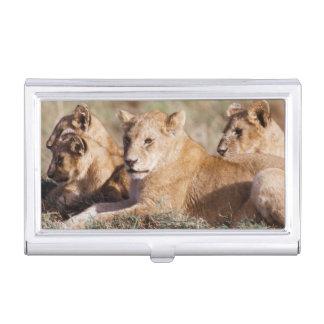 Étui Pour Cartes De Visite Le Kenya, masai Mara, lion CUB